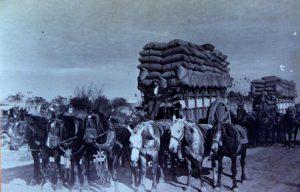 Transportando granos